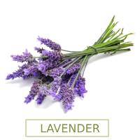 SacredEarth Lavender